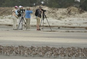 SIB Bird Nerds on North Beach- Ed Konrad