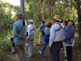 "Looking for the elusive Yellow-billed Cuckoo - SIB members during ""Birding with David Gardner"" at St. Christopher's on April 21, 2016. Patricia Schaefer"