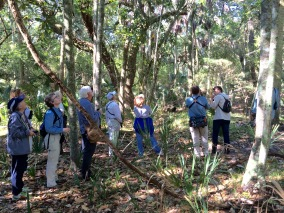 """We can hear you ... "" - SIB members during ""Birding with David Gardner"" at St. Christopher's on April 21, 2016. Patricia Schaefer"