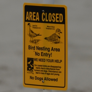 New signs posted on North Beach protecting nesting areas of Least Terns and Wilson's Plovers.