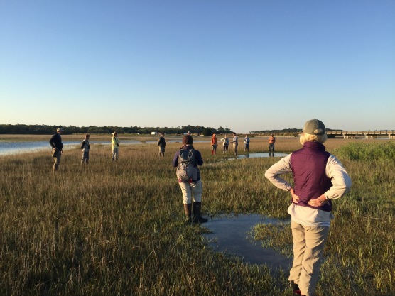 A Master Naturalist class assisting Aaron Given on his winter banding of Marsh Sparrows at the Kiawah River marsh.