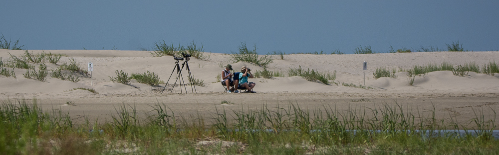 Birding on North Beach - Ed Konrad