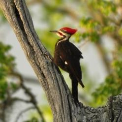 Bird C - Ed Konrad