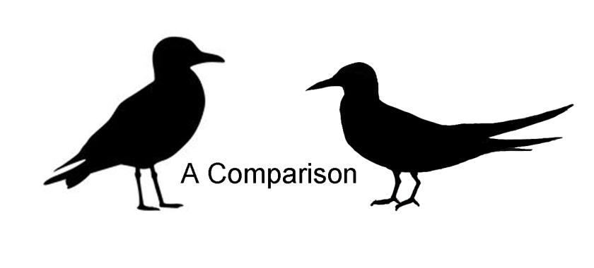 What type of birds does the left and right silhouette represent?