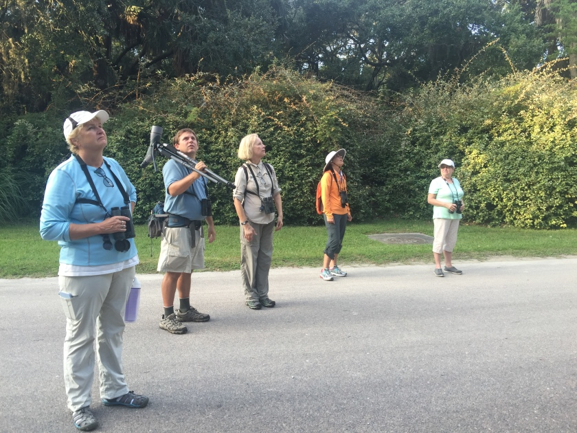SIB members Flo Foley, Aija Konrad, Lydia McDonald and Marnie Ellis joined David Gardner in searching for migrating warblers on Thursday 9/29. - N. Brown