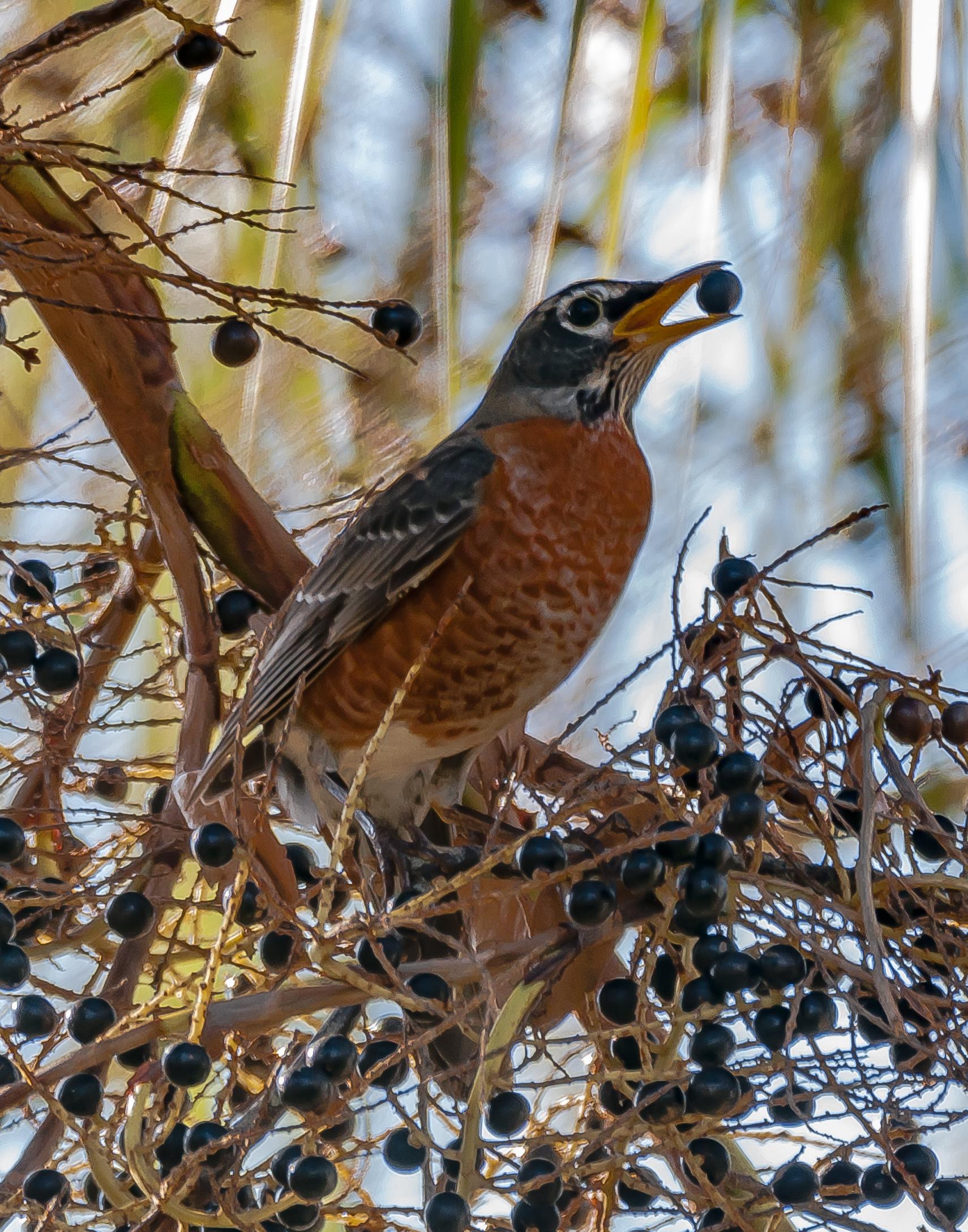 Encounters Explorer - Migración de Aves - Milagros en Alas