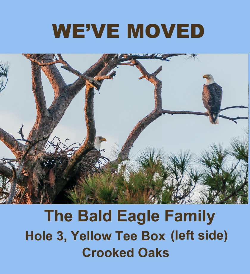 weve-moved-eagle-nest