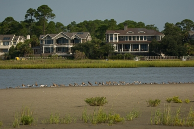 4) Large mix of birds on back side of old inlet - Ed Konrad