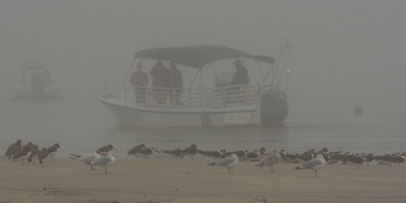 Shore & Seabirds through the fog at North Beach - Ed Konrad