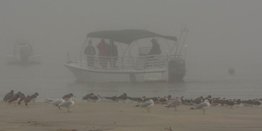 Shore & Seabirds through the fog at North Beach - Ed Konrad