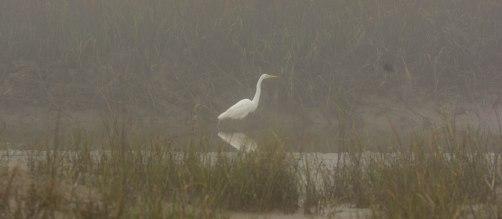 Great Egret at North Beach - Ed Konrad