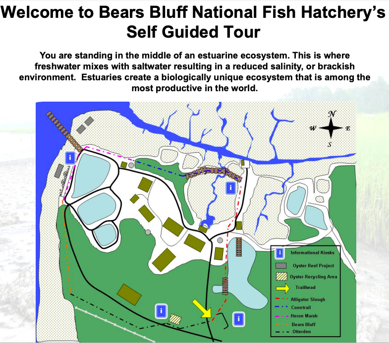 Birding Beyond our Backyard – Bears Bluff Fish Hatchery – SIB