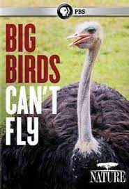 Big Birds Can't Fly | School Library Journal