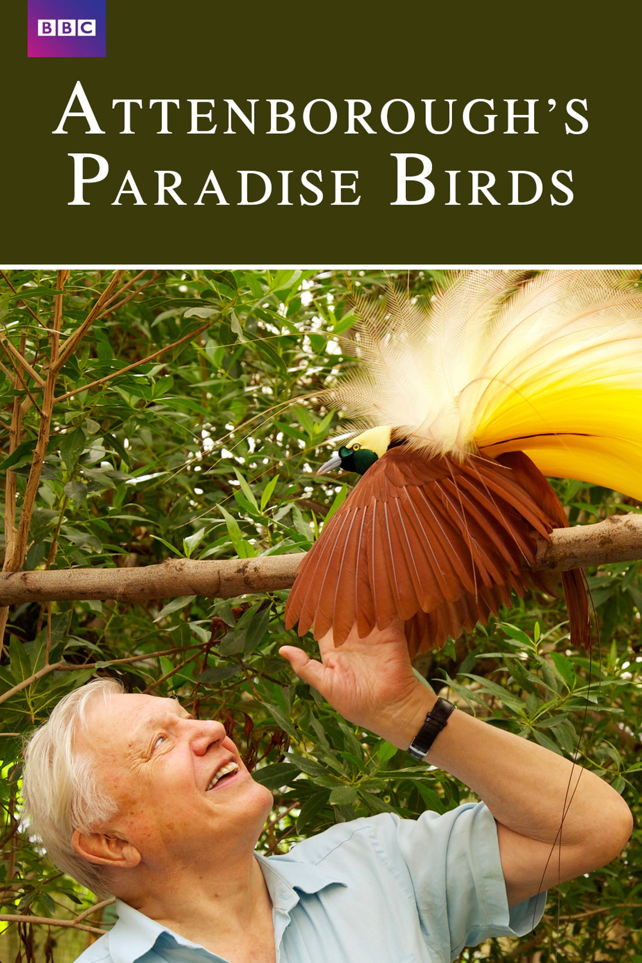 attenborough bird of paradise